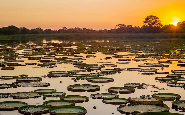 Amazon River. THE ENCOUNTER, based on Amazon Beaming at the Curran theater.